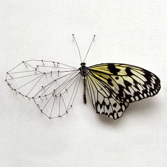 Butterfly Reconstruction