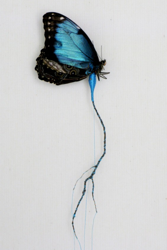 Butterfly Reconstruction blue one