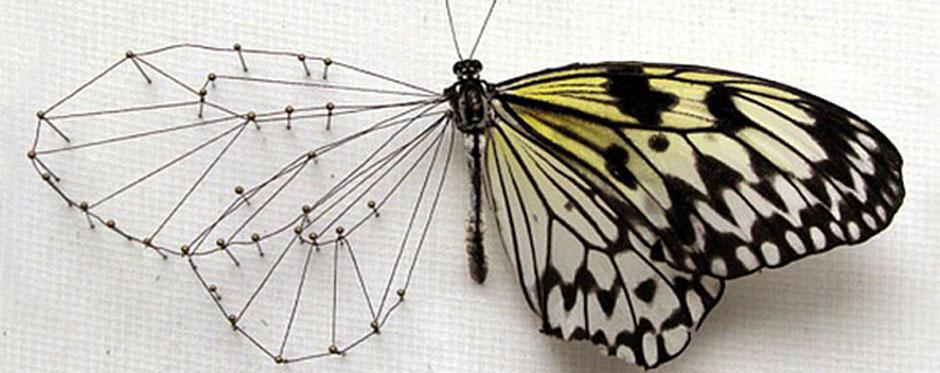 ricostruzione-farfalle-itsnotplastic-0